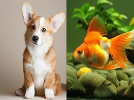 Những con vật đem lại may mắn theo quan điểm dân gian