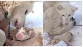 Justice for mother dog and her newborn puppies left to freeze in the cold!