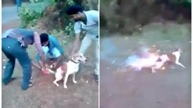 Punish teenagers that strapped fireworks to dog's tail for laughs!