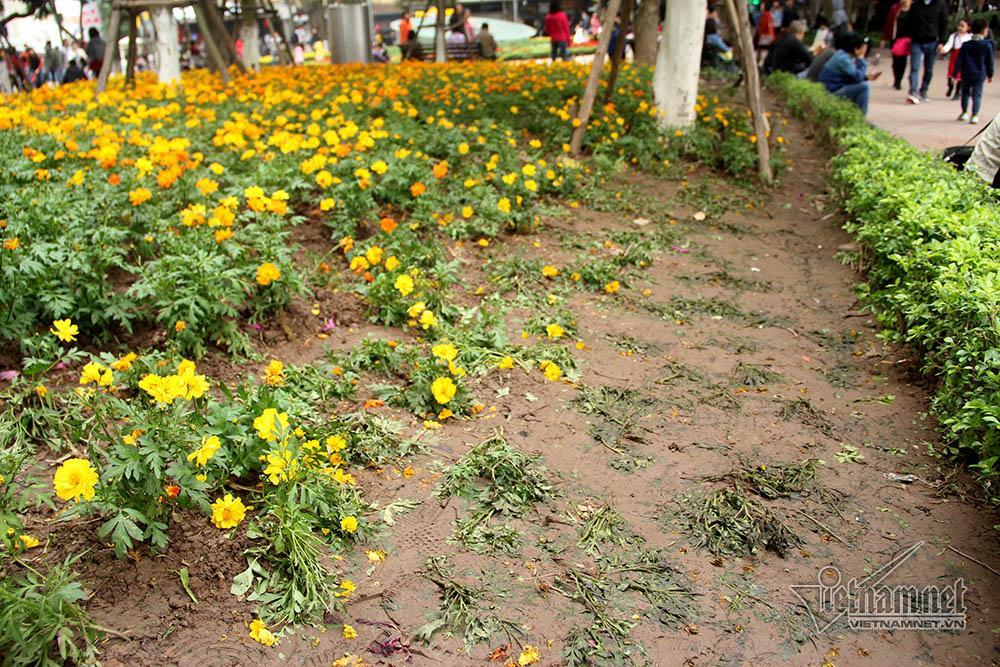 Vườn hoa hồ Gươm bị san phẳng sau đêm giao thừa-11