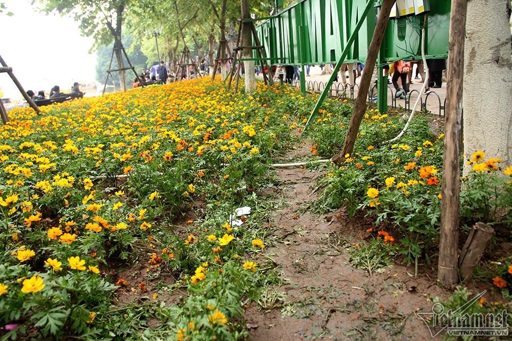 Vườn hoa hồ Gươm bị san phẳng sau đêm giao thừa-12