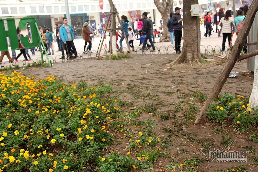 Vườn hoa hồ Gươm bị san phẳng sau đêm giao thừa-8
