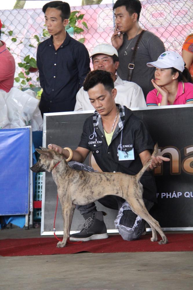Ngắm mỹ khuyển trong Hội thi Chó đẹp lần đầu tổ chức tại miền Tây-5