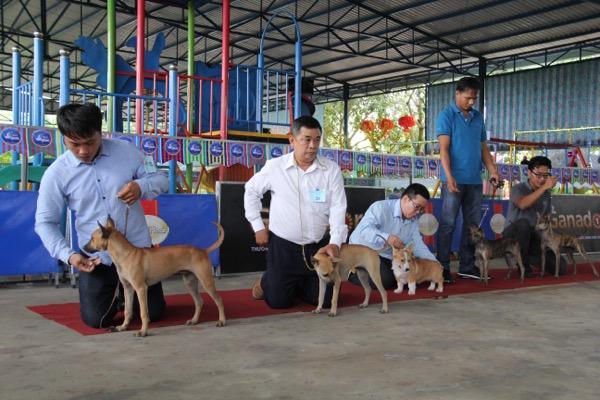 Ngắm mỹ khuyển trong Hội thi Chó đẹp lần đầu tổ chức tại miền Tây-10