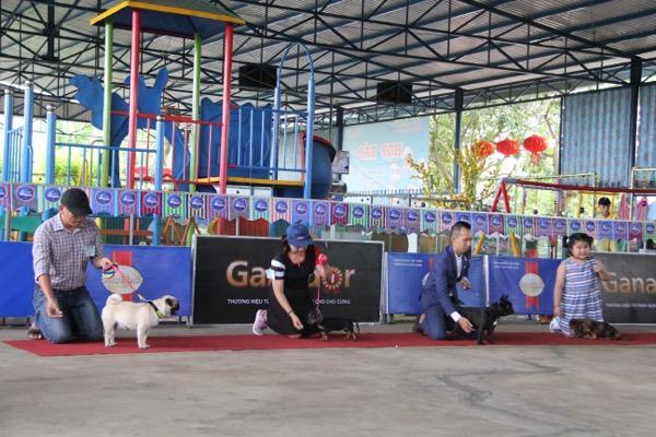 Ngắm mỹ khuyển trong Hội thi Chó đẹp lần đầu tổ chức tại miền Tây-11
