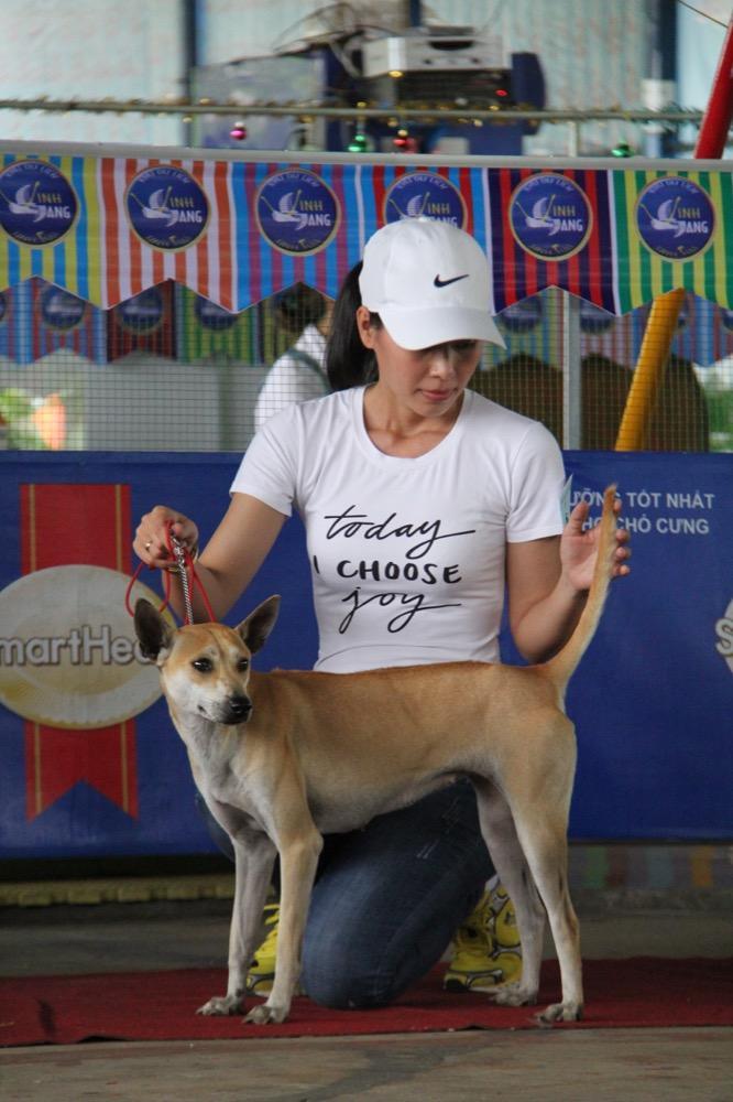 Ngắm mỹ khuyển trong Hội thi Chó đẹp lần đầu tổ chức tại miền Tây-6