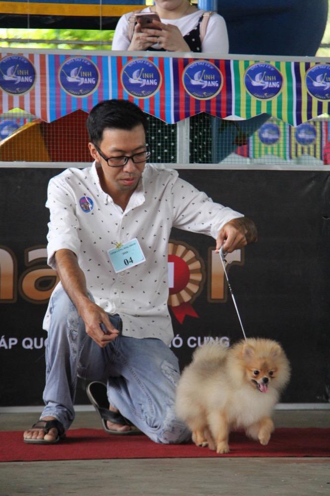 Ngắm mỹ khuyển trong Hội thi Chó đẹp lần đầu tổ chức tại miền Tây-7