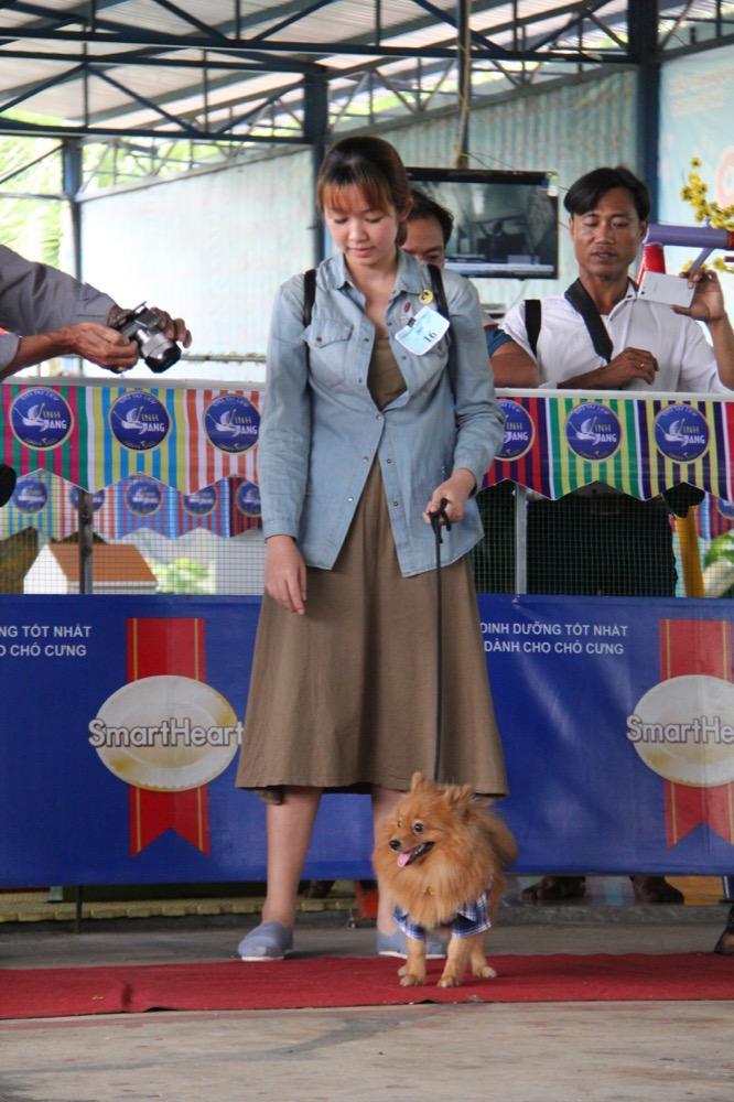 Ngắm mỹ khuyển trong Hội thi Chó đẹp lần đầu tổ chức tại miền Tây-8