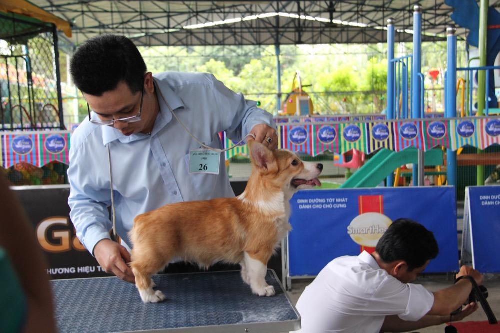 Ngắm mỹ khuyển trong Hội thi Chó đẹp lần đầu tổ chức tại miền Tây-9
