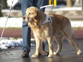Năm Tuất, xem clip chú chó và người chủ mù để trút bỏ gánh nặng muộn phiền còn đeo đẳng