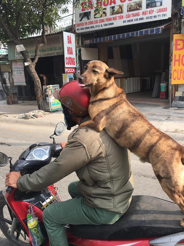 Chú chó kẻ lông mày sâu róm, diện bộ cánh ngựa vằn, biết làm duyên trước ống kính-1