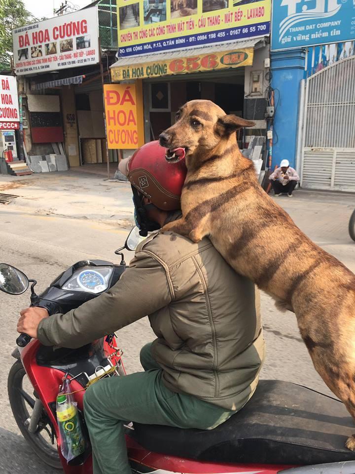 Chú chó kẻ lông mày sâu róm, diện bộ cánh ngựa vằn, biết làm duyên trước ống kính-2