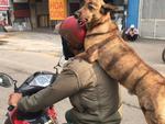 Chú chó kẻ lông mày sâu róm, diện 'bộ cánh' ngựa vằn, biết làm duyên trước ống kính