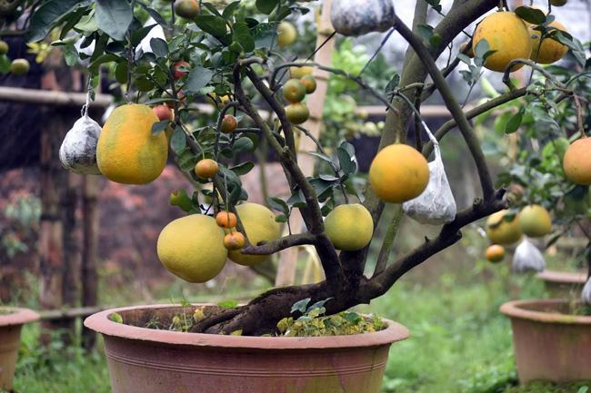Clip: Độc đáo cây có 10 loại quả cùng chín rộ vào dịp Tết-3