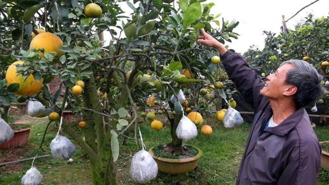 Clip: Độc đáo cây có 10 loại quả cùng chín rộ vào dịp Tết-4