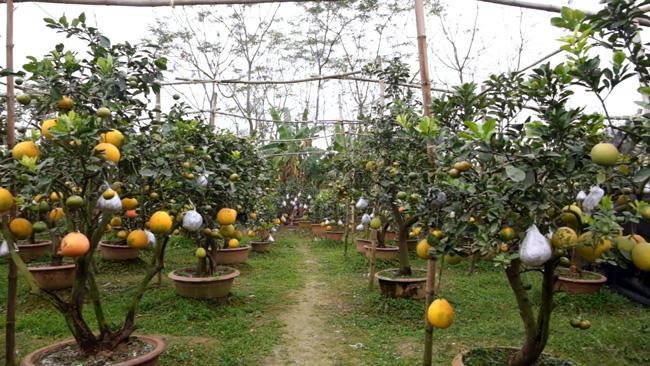 Clip: Độc đáo cây có 10 loại quả cùng chín rộ vào dịp Tết-10