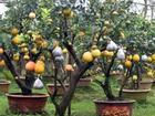 Clip: Độc đáo cây có 10 loại quả cùng chín rộ vào dịp Tết