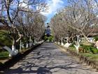 4 con đường ở Tây Nguyên đẹp như cảnh trên phim Hàn