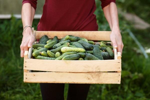 10 thực phẩm hằng ngày giúp cơ thể giải độc tự nhiên-1