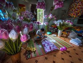 Làng hoa giấy 400 tuổi ở Huế đón Tết