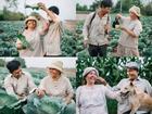 Bộ ảnh con trai chụp bố mẹ trên cánh đồng rau bắp cải chạm đến trái tim triệu người