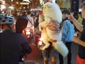 Chú chó ở Sài Gòn xuất hiện trên báo Tây vì có thân hình 'khủng'