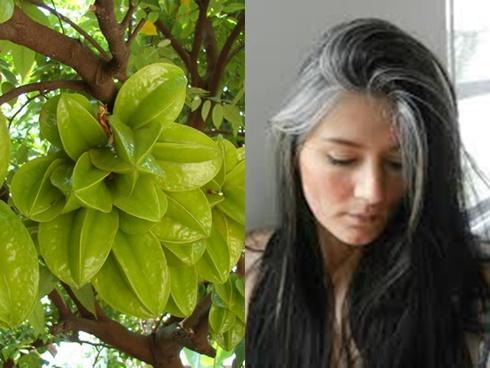 Clip: Tuyệt chiêu trị tóc bạc sớm bằng khế chua vô cùng đơn giản