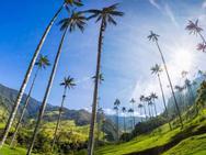 Lạc vào 'chốn thần tiên' có những cây dừa cao nhất thế giới