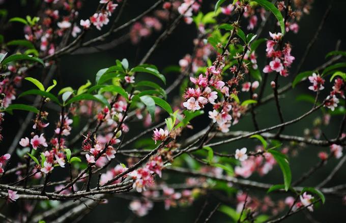 Lên lịch sẵn cho kế hoạch săn hoa khắp 12 tháng trong năm-2