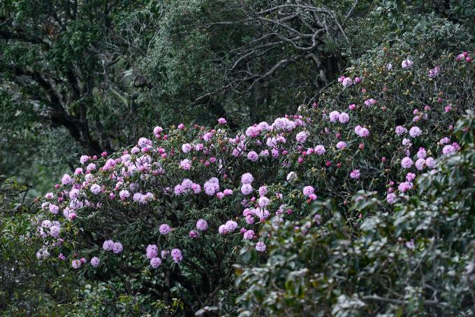 Lên lịch sẵn cho kế hoạch săn hoa khắp 12 tháng trong năm-4