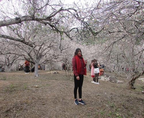 Lạc trôi vào rừng mơ trắng bồng bềnh trên cao nguyên Mộc Châu-2