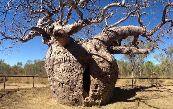 Kỳ lạ những điểm du lịch hút khách đến thăm chỉ vì… 1 cái cây-3