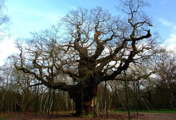 Kỳ lạ những điểm du lịch hút khách đến thăm chỉ vì… 1 cái cây-4