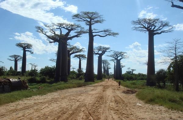 Kỳ lạ những điểm du lịch hút khách đến thăm chỉ vì… 1 cái cây-10
