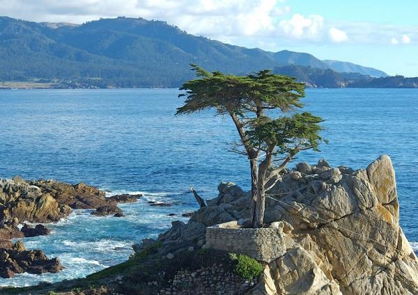 Kỳ lạ những điểm du lịch hút khách đến thăm chỉ vì… 1 cái cây-5