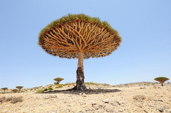 Kỳ lạ những điểm du lịch hút khách đến thăm chỉ vì… 1 cái cây-7