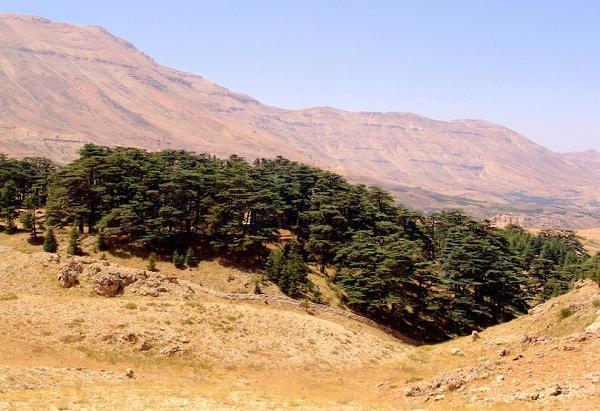 Kỳ lạ những điểm du lịch hút khách đến thăm chỉ vì… 1 cái cây-9