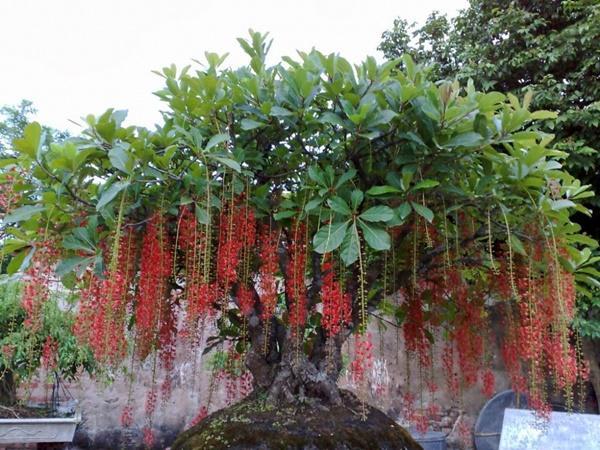 Con giáp này bằng mọi giá phải trồng được loại cây này trong nhà để tình tiền sáng rực, giàu ú ụ-1