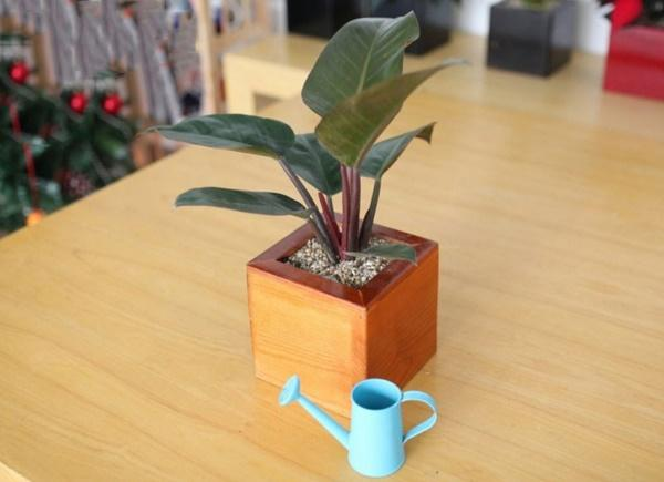 Con giáp này bằng mọi giá phải trồng được loại cây này trong nhà để tình tiền sáng rực, giàu ú ụ-3