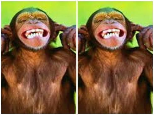Chết cười với những chú khỉ 'lầy lội'
