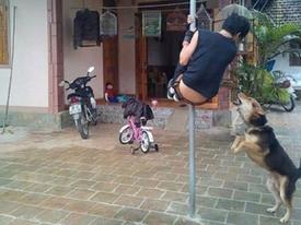 Tuyển chồng không sợ chó