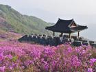 Tất tần tật những điểm ăn chơi thú vị tại quê hương HLV Park Hang-seo