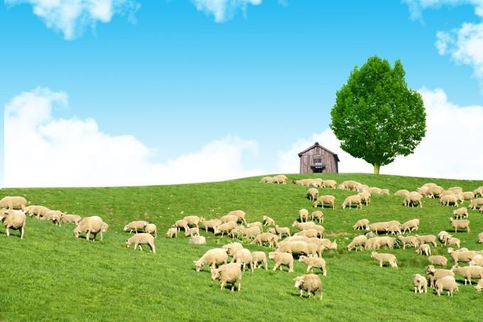 Đến Hàn Quốc, nhớ ghé trại cừu đẹp như phim mà Xuân Trường đã hẹn hò cùng bạn gái tin đồn-2