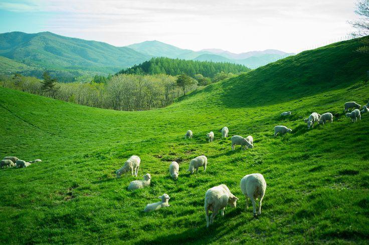 Đến Hàn Quốc, nhớ ghé trại cừu đẹp như phim mà Xuân Trường đã hẹn hò cùng bạn gái tin đồn-3