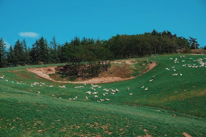 Đến Hàn Quốc, nhớ ghé trại cừu đẹp như phim mà Xuân Trường đã hẹn hò cùng bạn gái tin đồn-4