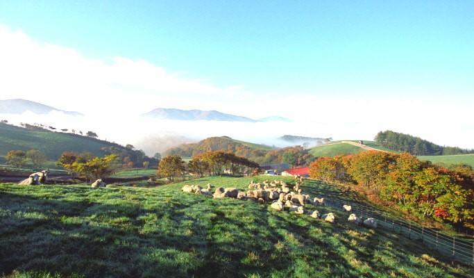 Đến Hàn Quốc, nhớ ghé trại cừu đẹp như phim mà Xuân Trường đã hẹn hò cùng bạn gái tin đồn-5