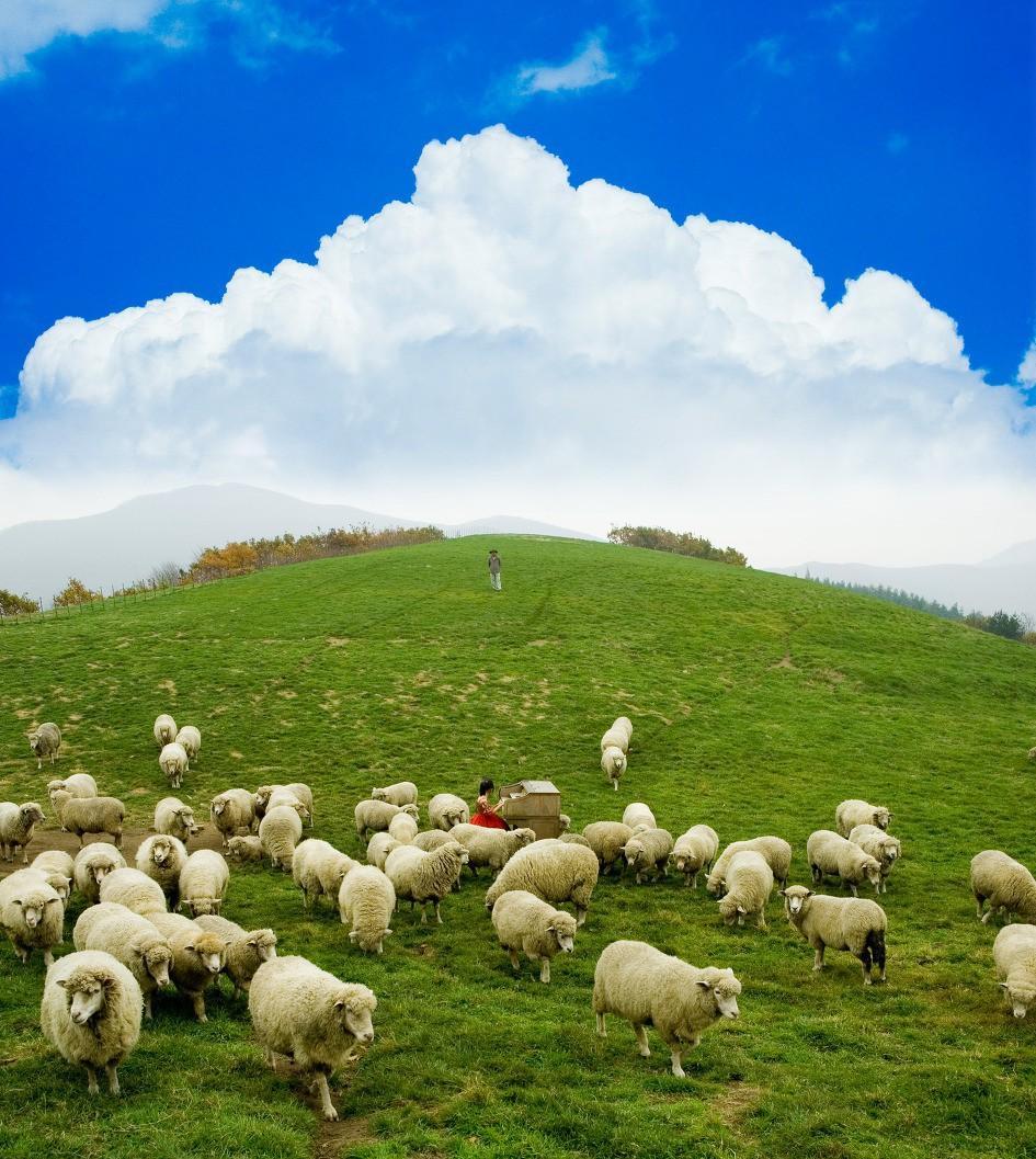 Đến Hàn Quốc, nhớ ghé trại cừu đẹp như phim mà Xuân Trường đã hẹn hò cùng bạn gái tin đồn-6