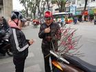 Người Hà Nội xuống phố mua đào về chơi Tết sớm