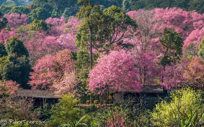 Du lịch: Dạo chơi ở thung lũng hoa đào dài vạn dặm