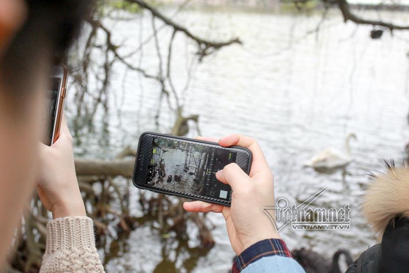 Hà Nội thả 12 con thiên nga châu Âu ở hồ Gươm-9